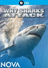 NOVA: Why Sharks Attack